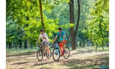 Горный велосипед Format 1412 29 (2016)